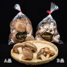 画像5: うみかぜ椎茸(生)A品3袋セット (5)